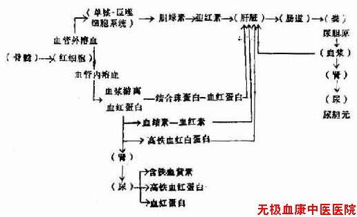 溶血后血红蛋白代谢的途径