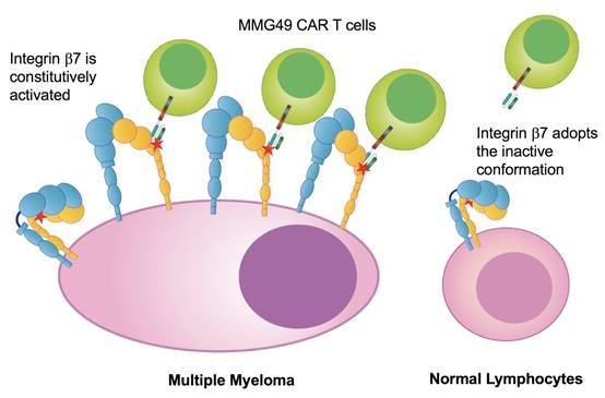 CAR-T治疗多发性骨髓瘤又添特异性新靶点,临床前研究结果安全有效