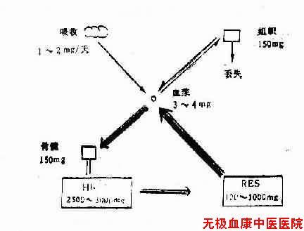 缺铁性贫血(IronDrficiencyAne